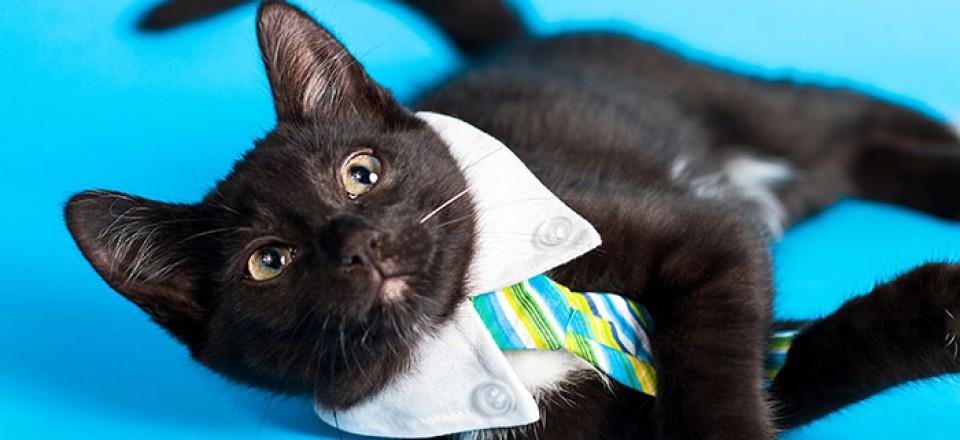 Black Cat on Blue